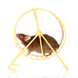 exercise rat running wheel